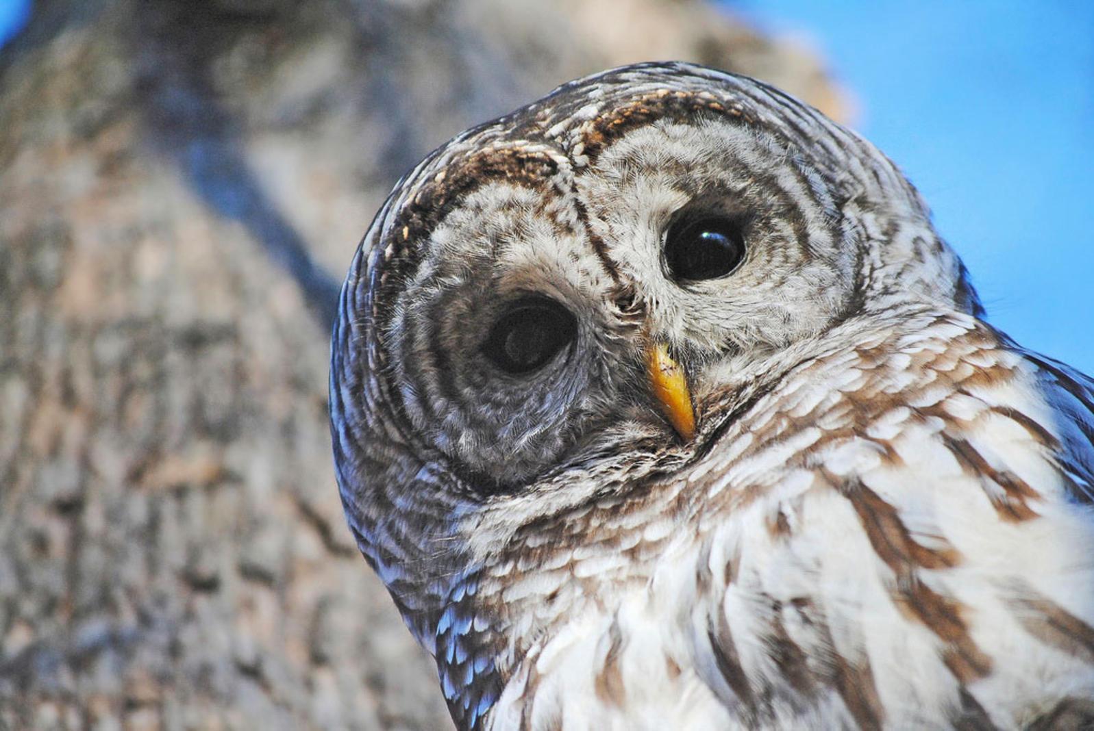 owl-zoo